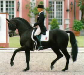 Rubinstein Grand Prix Dressage Stallion